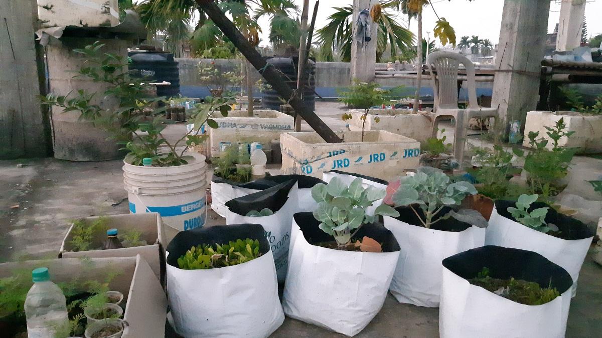 Image of Rooftop Gardening